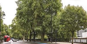 Grosvenor Road, SW1V